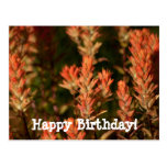 Indian Paintbrush; Happy Birthday Postcard