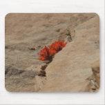 Indian Paintbrush in Rocks Mousepad