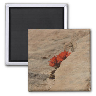 Indian Paintbrush in Rocks Nature Wildflower Magnet