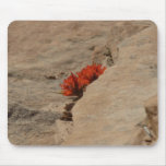 Indian Paintbrush in Rocks Nature Wildflower Mouse Pad