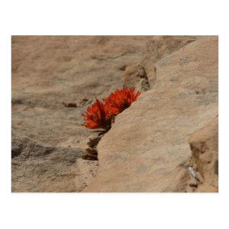 Indian Paintbrush in Rocks Nature Wildflower Postcard