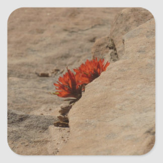 Indian Paintbrush in Rocks Nature Wildflower Square Sticker
