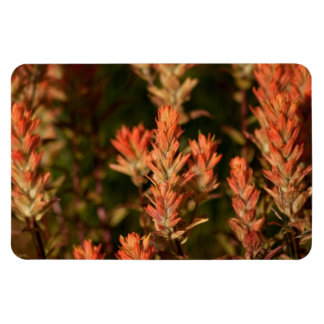 Indian Paintbrush; No Text Magnet
