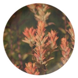Indian Paintbrush; No Text Plate