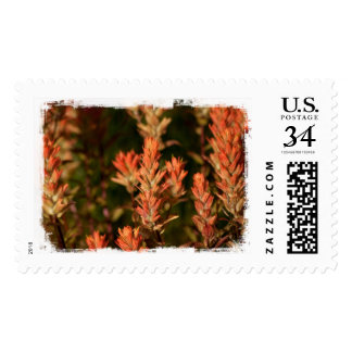Indian Paintbrush; No Text Postage