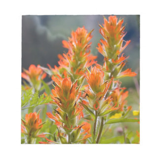 Indian Paintbrush Notepad