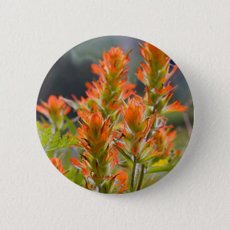Indian Paintbrush Pinback Button