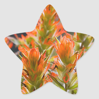 Indian Paintbrush Star Sticker