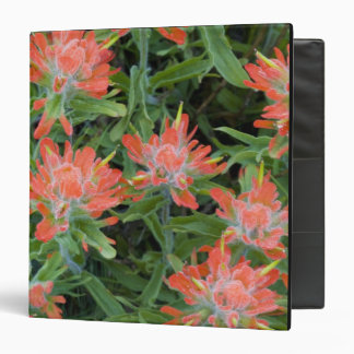 Indian paintbrush wildflowers in the Many Binder