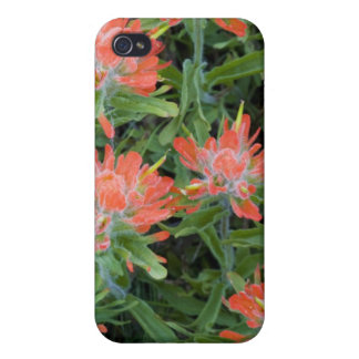 Indian paintbrush wildflowers in the Many iPhone 4 Case