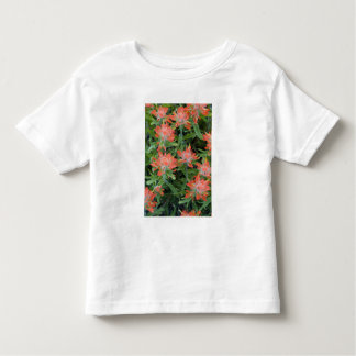 Indian paintbrush wildflowers in the Many Tshirts