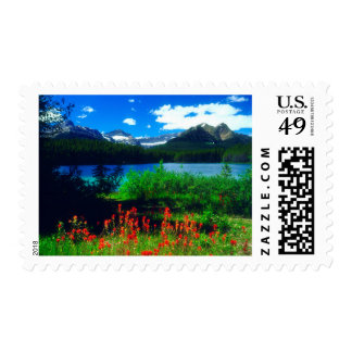Indian Paintbrush Wildflowers Postage Stamp