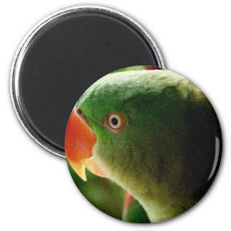 Indian Parrot Magnet
