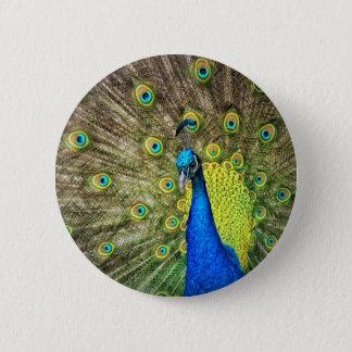 Indian Peacock Button
