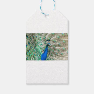 Indian Peacock Gift Tags