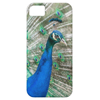 Indian Peacock iPhone SE/5/5s Case