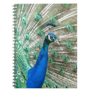 Indian Peacock Notebook