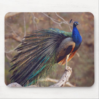 Indian Peacock with partially open feathers, Mouse Pad