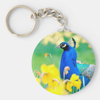 Indian Peafowl among narcissus flowers Key Chains