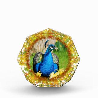 Indian Peafowl Acrylic Award