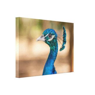 Indian peafowl canvas print