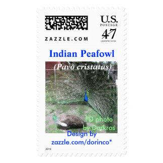 Indian Peafowl (Pavo cristatus) 2 Postage