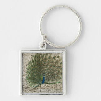Indian peafowl, peacock, male courtship display key chains
