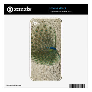 Indian peafowl, peacock, male courtship display decals for the iPhone 4