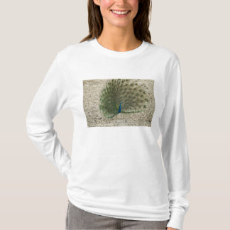 Indian peafowl, peacock, male courtship display T-Shirt