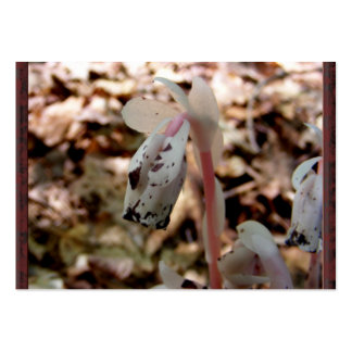 Indian Pipe 32 ~ ATC Large Business Card