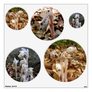 Indian Pipe ~ Wall Decals