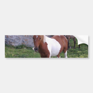 Indian Pony Bumper Sticker