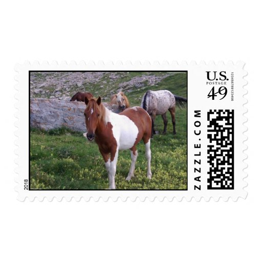 Indian Pony Horse Postage Stamp