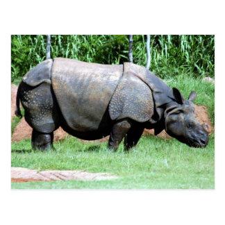 Indian Rhino4x6 Postcard