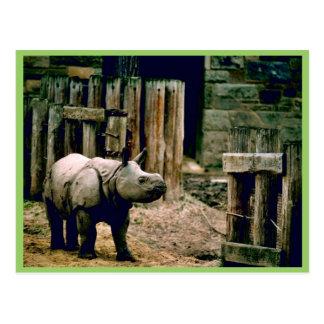 Indian Rhino Postcard