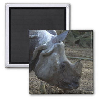 Indian Rhinoceros 2 Inch Square Magnet