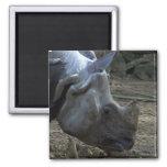 Indian Rhinoceros Refrigerator Magnet
