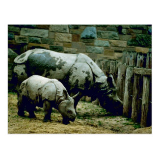 Indian Rhinos Postcard