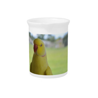 Indian Ringneck in the Shade Pitcher