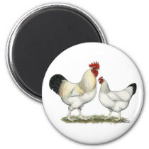 Indian River Chickens Magnet