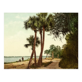 Indian River Florida 1898 Photo Postcard