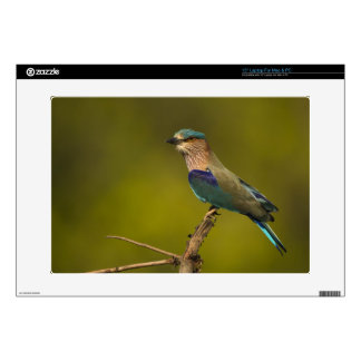 Indian Roller perched on open tree Decal For Laptop