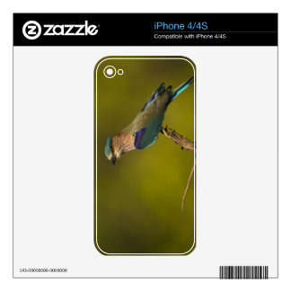 Indian Roller perched on open tree Decals For The iPhone 4