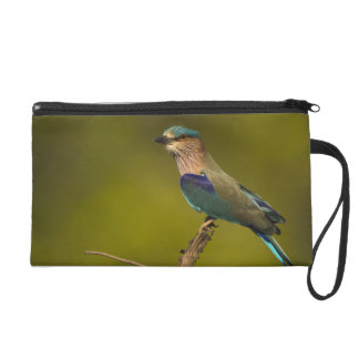 Indian Roller perched on open tree Wristlet Purse