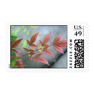 Indian Summer Morn Stamps