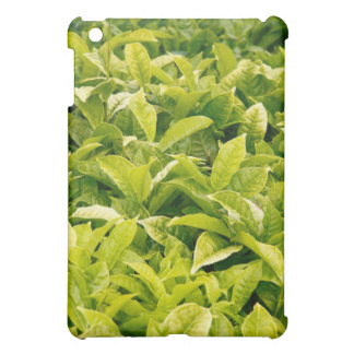 Indian variety of tea iPad mini cover