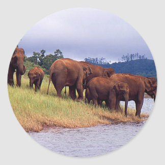 Indian wild elephants classic round sticker