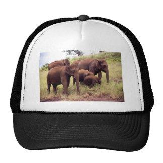 Indian wild elephants trucker hat