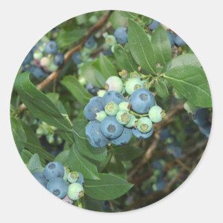 Indiana Blueberries Classic Round Sticker