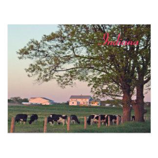 Indiana Farm Postcard